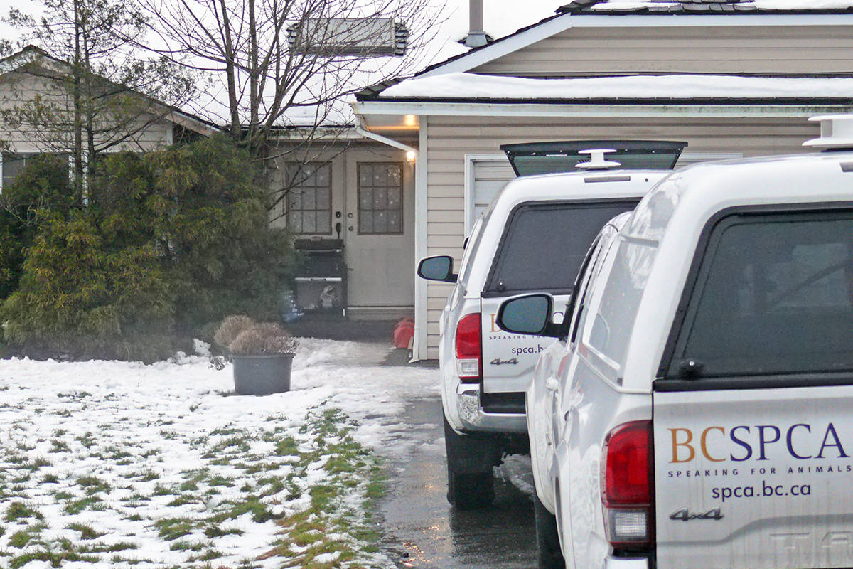 Several SPCA vehicles were seen outside a Langley house in the 5500 block of 216 Street on Sunday (Jan. 19) around 4 p.m. (Dan Ferguson/Langley Advance Times)