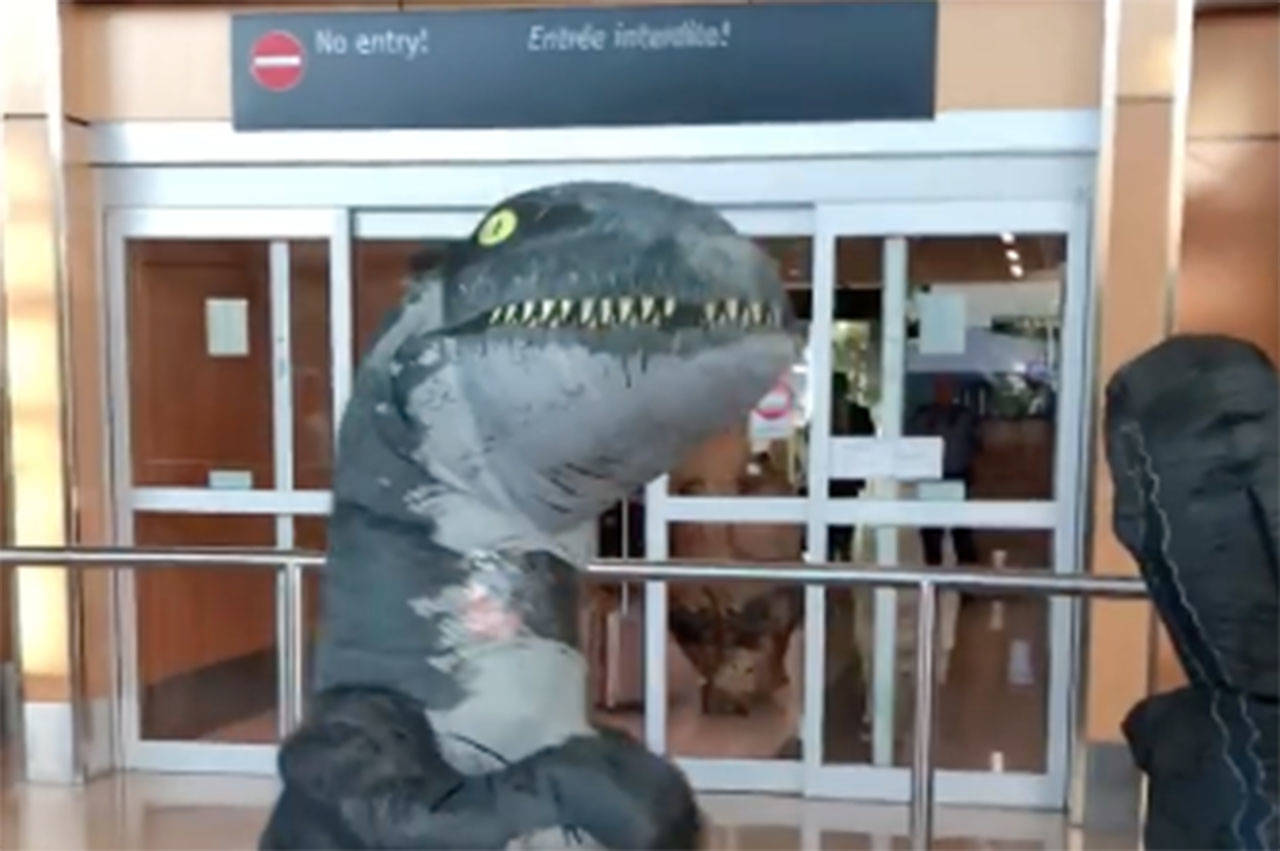 Two boys dressed up as dinosaurs to greet their grandmother; little did they know who— or what— would be greeting them (File contributed/ Tabitha Cooper)