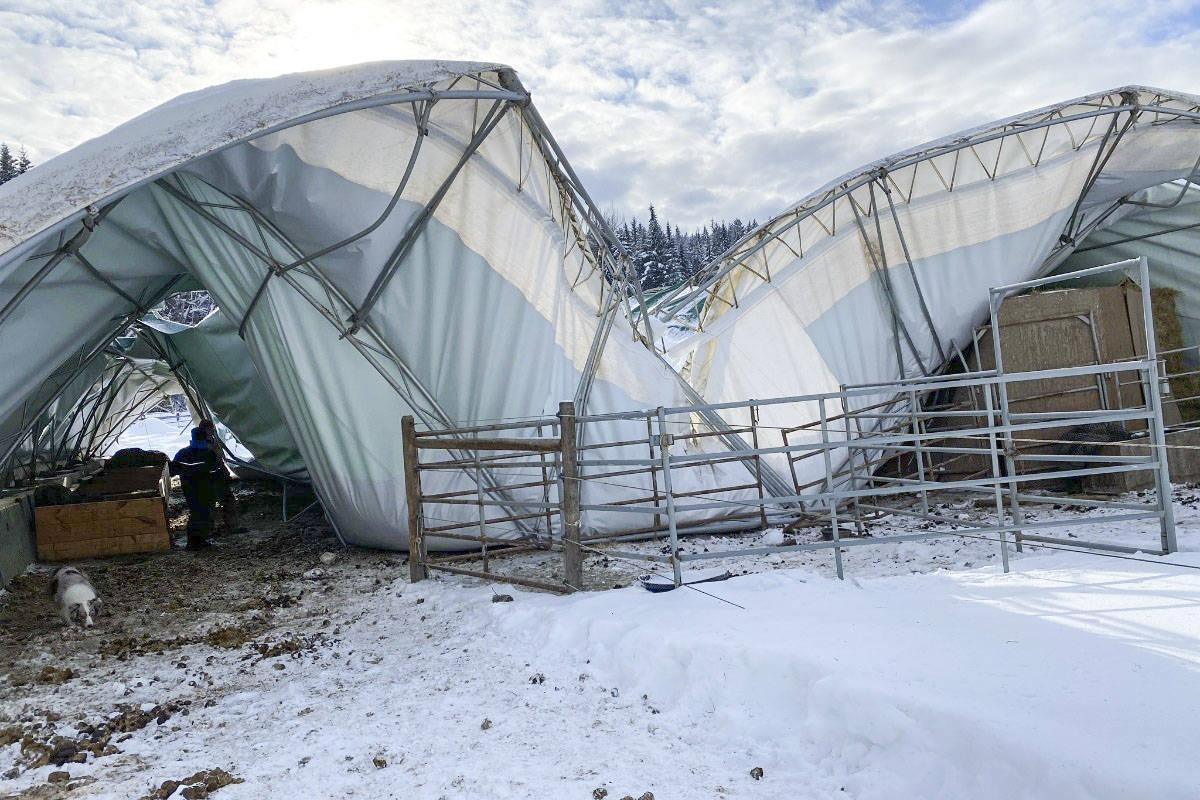 Beloved horse dies in Shuswap after shelter collapses under snow