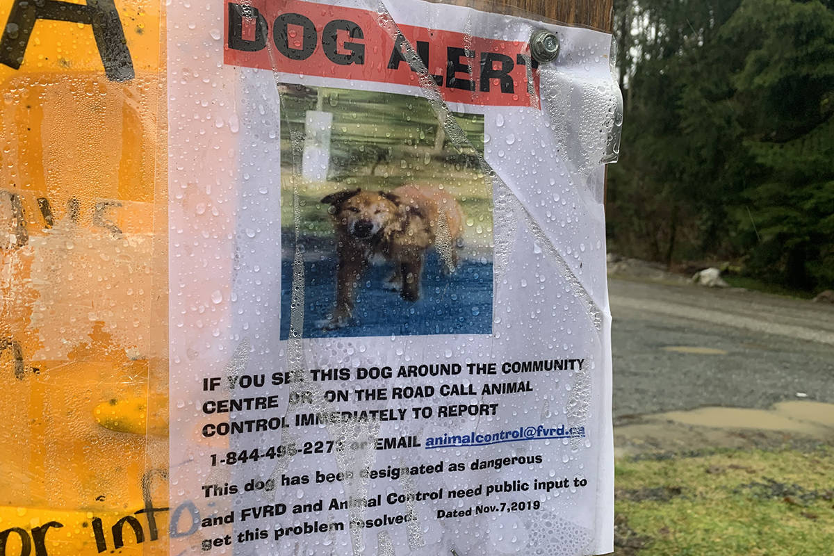 A sign warning residents about a dog that has allegedly attacked as many as seven people in the Columbia Valley south of Chilliwack on Jan. 29, 2020. (Paul Henderson/ The Progress)