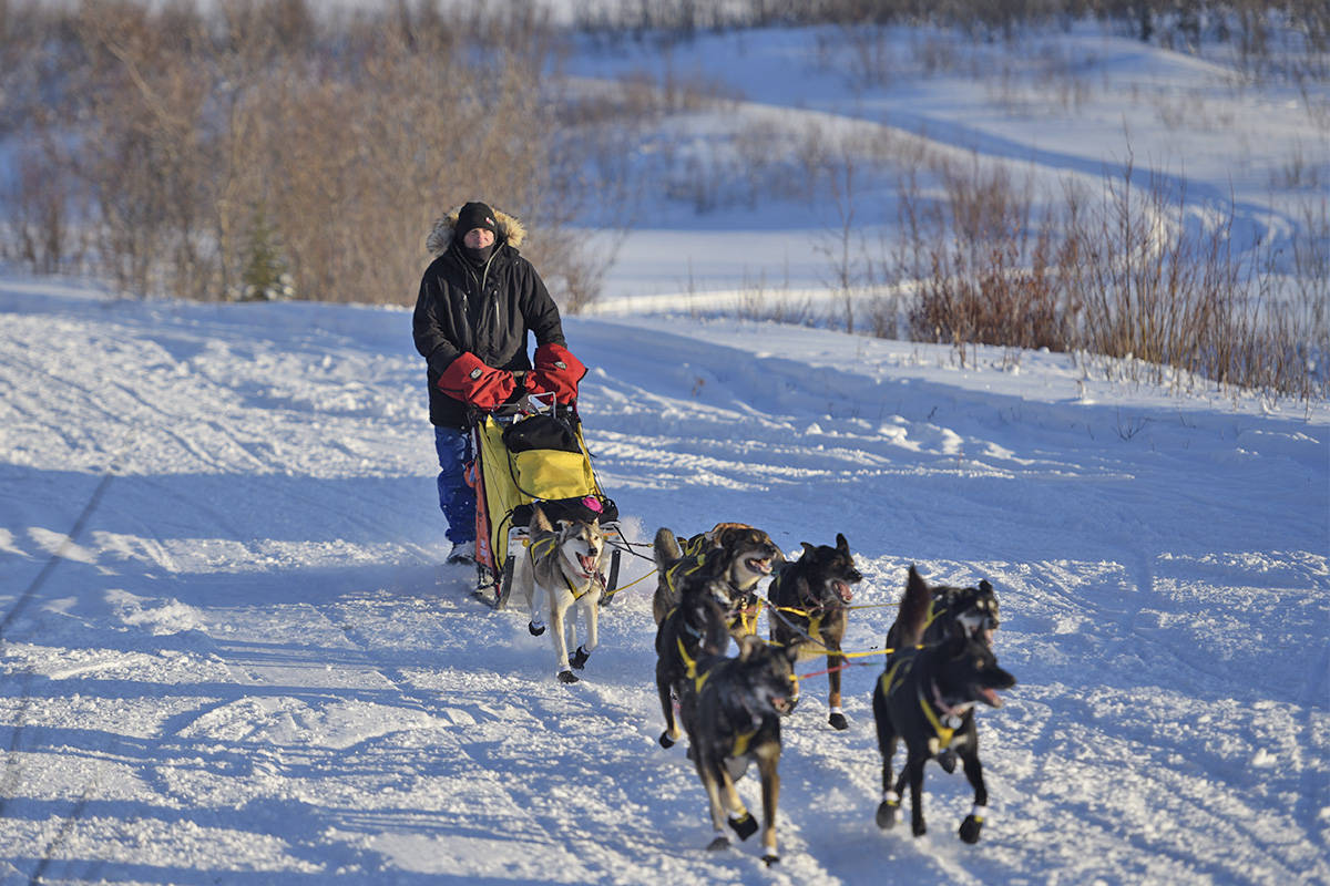 """Hans Gatt arrives at the Mile 101 checkpoint during the 2019 Yukon Quest. Gatt's sled for this race was a """"tail dragger"""" but he removed the rear box earlier in the race. (John Hopkins-Hill/Yukon News file)"""