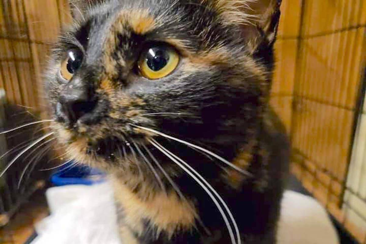Cat found in 7-Eleven Dumpster in Smithers recovering, after anonymous donation