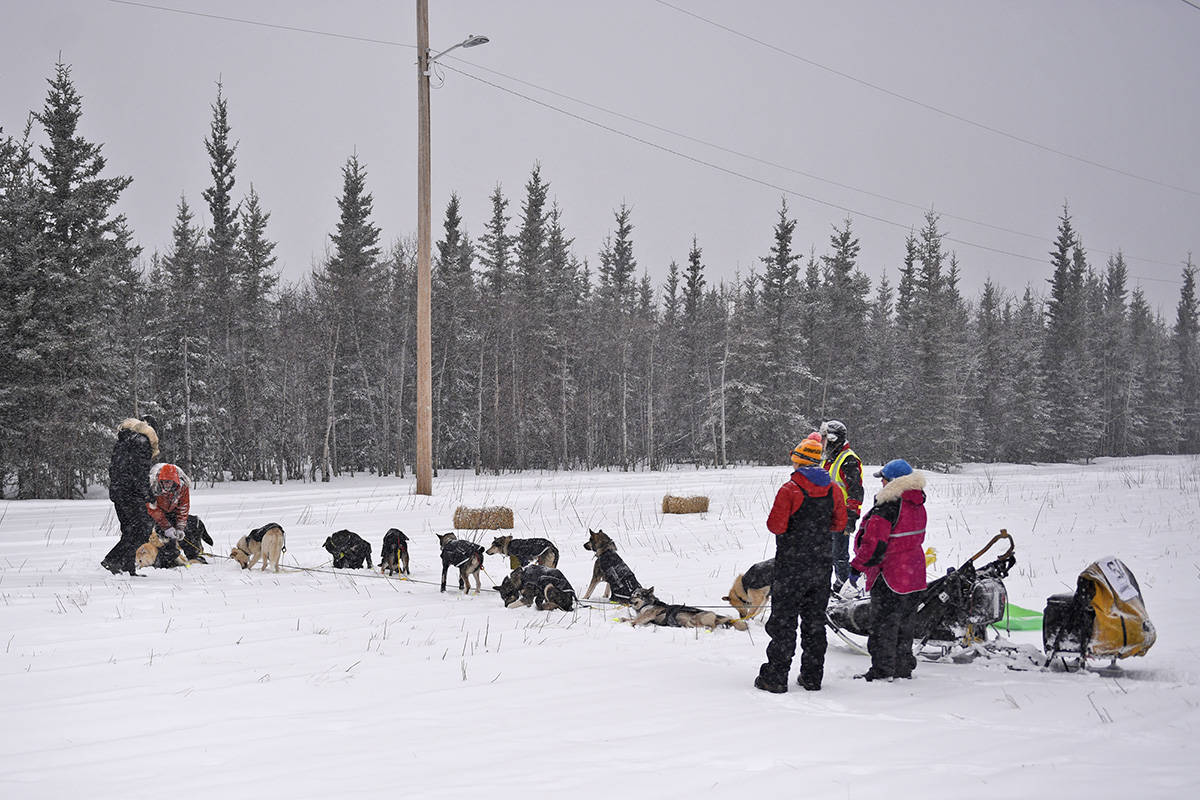 Brent Sass tends to his team at the Braeburn checkpoint on Feb. 10 during the 2020 Yukon Quest. (John Hopkins-Hill/Yukon News file)
