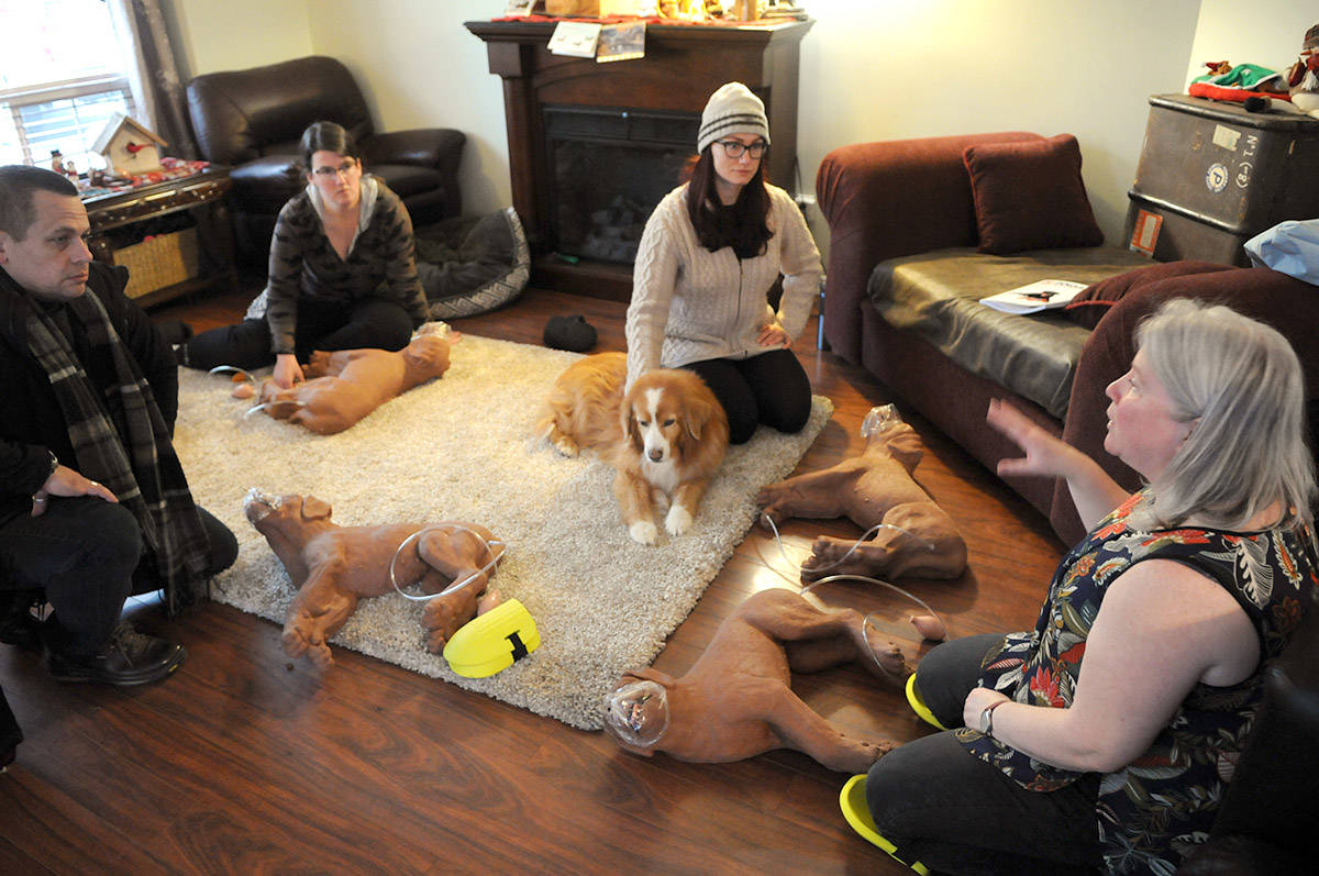 Chilliwack's Laurie McPhee is the only instructor in the Fraser Valley on the south side of the river who offers Dogsafe Canine First Aid training. (Jenna Hauck/ The Progress)