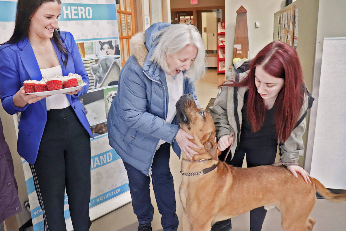 One-year-old Marshall recently eyed a delectable plate of cupcakes, as well as LAPS United baker Lynn Dennis (middle), to the surprise of his handler Brooke Vilbert (right). (Sarah Grochowski photo)