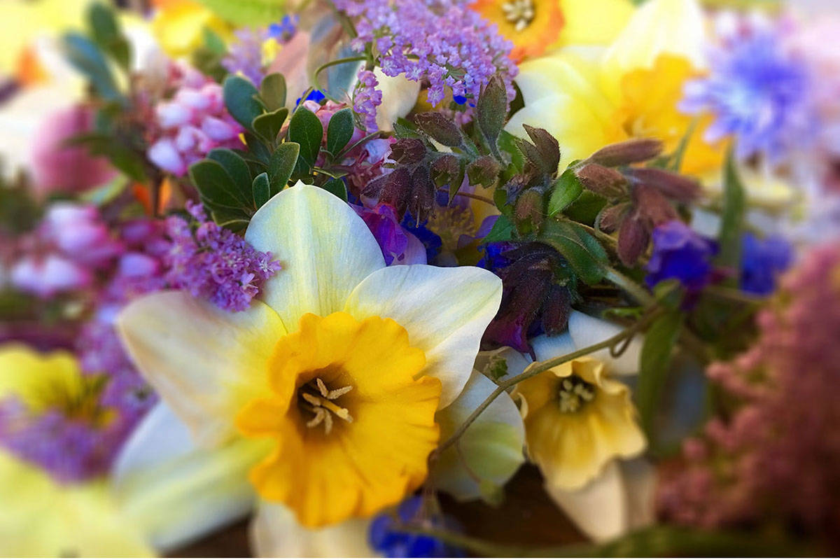 The best thing a flower-lover can do is buy locally to reduce the travel-related carbon footprint, says Julia Zini. (Black Press Media)