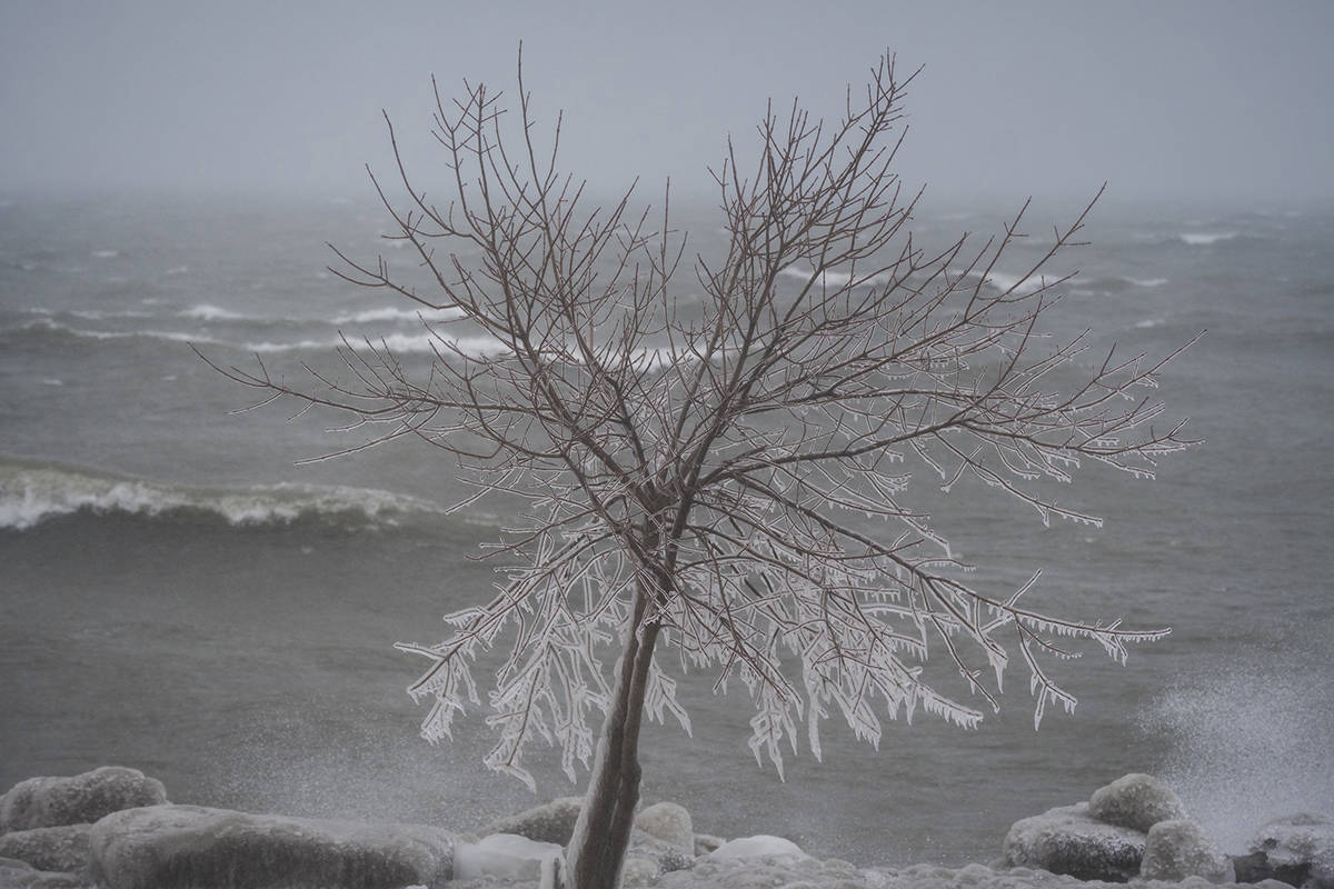 Icicles form along the tree branches as the rough waves crash into shore at Coronation Park in Toronto on Tuesday, February 12, 2019. Canadians can expect average temperatures this fall that will give way to a cold winter in central and eastern parts of the country, according to The Weather Network.THE CANADIAN PRESS/ Tijana Martin