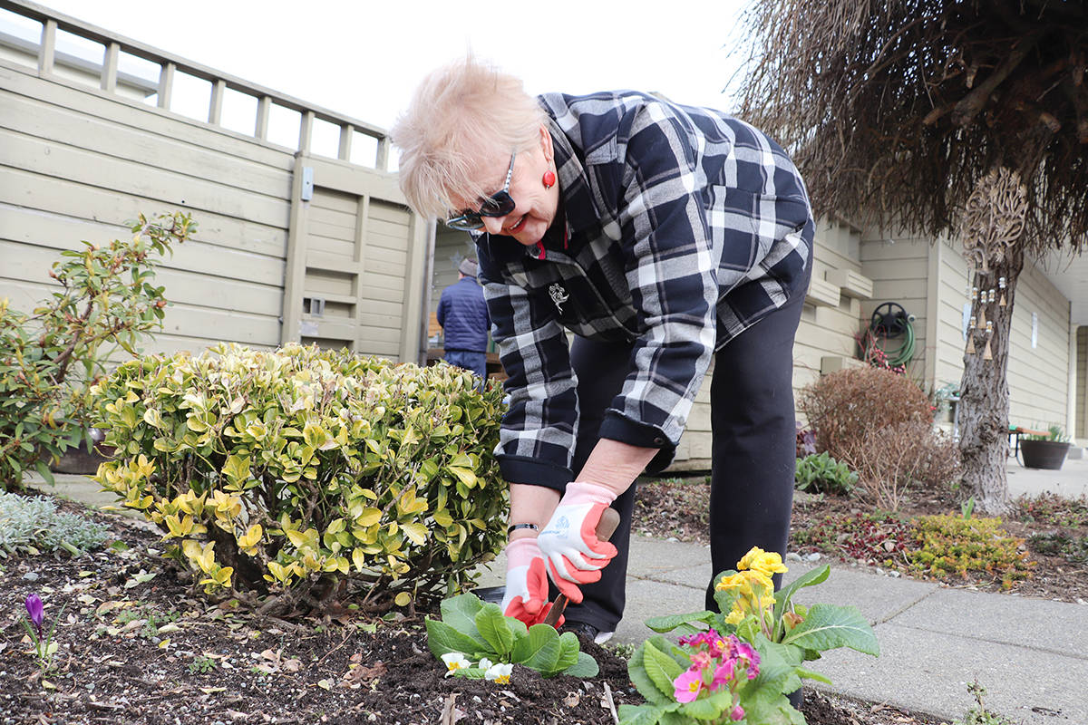 Many activities were cancelled during Friday's open house at the Langley Senior Resources Centre due to concerns about COVID-19, but gardening was still an option for Hedy Cassap who took the opportunity to plant fresh blooms outside the entrance of the centre. Starting Tuesday the centre will be closed until further notice. (Joti Grewal/Langley Advance Times)