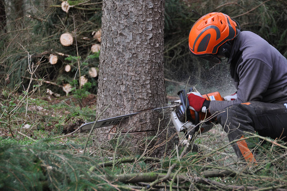 Interfor has announced curtailments in all the regions where they have forestry operations. (Black Press file photo)