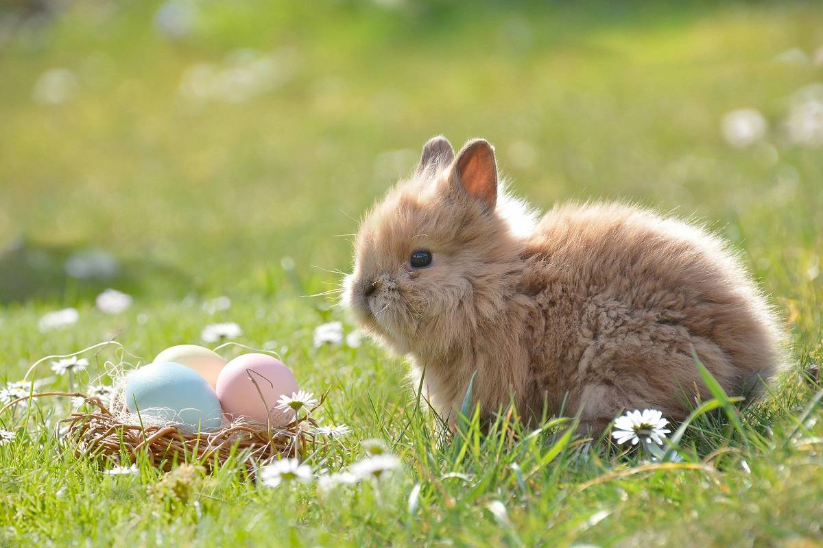 Easter Bunny added to B.C.'s list of essential workers