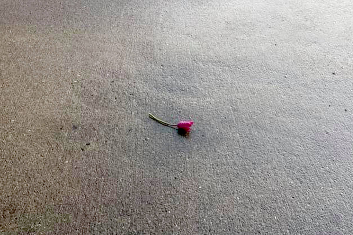 PHOTOS: Encouraging art and roses were left outside Langley City Fire Station