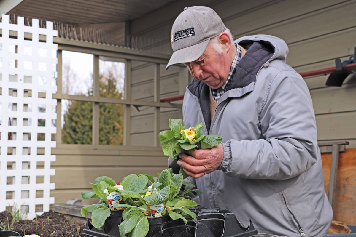 Volunteer Jerry Van Slageren did some gardening this spring for the Langley Seniors Resource Centre before it closed to the public to prevent COVID-19 spread. (Joti Grewal photo)