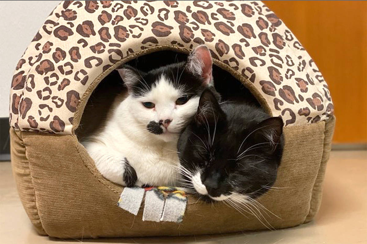 Hannah & Shoshi have found a 'fur'ever home. (LAPS/Special to Langley Advance Times)