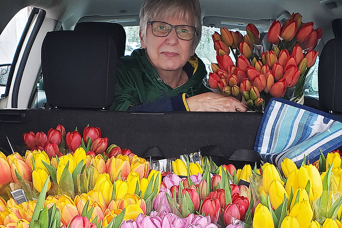 Volunteers, including Joyce, with Langley Meals on Wheels delivered tulips with the Wednesday meals to their clients, thanks to an anonymous local donor. (Shannon Woykin/Special to the Langley Advance Times)