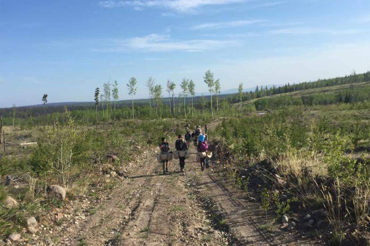As tree planting gets underway in B.C., especially in areas impacted by wildfires in 2017 and 2018, several new measures are being implemented due to COVID-19 precautions. This photo was taken in a previous planting season. (Paige Mueller photo)