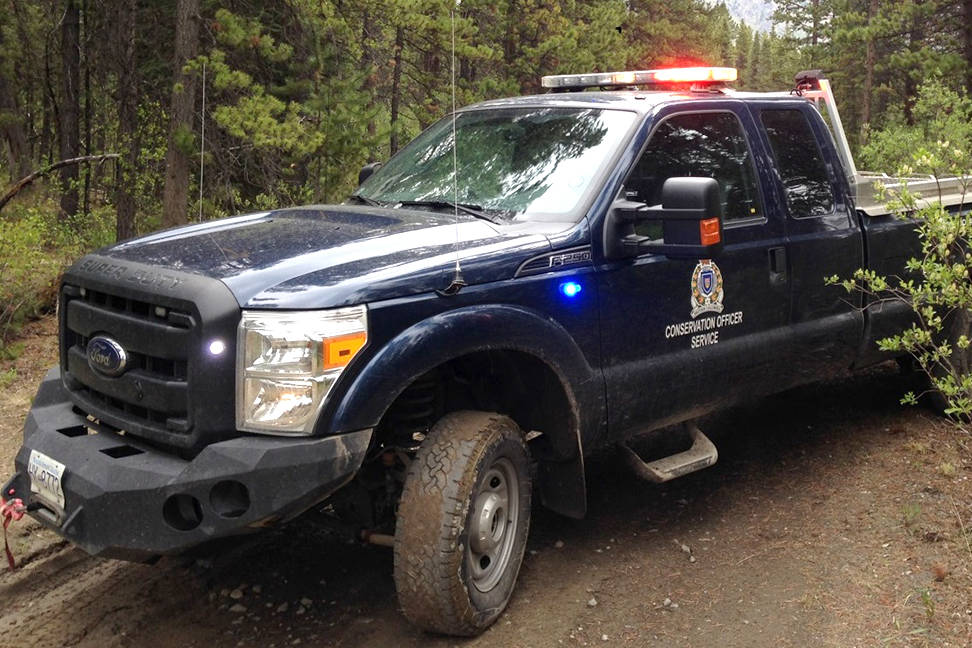 BC Conservation Officer Service is investigating the killing of a black bear that was left whole and then burned on a fire pit in a Shuswap gravel pit weeks later. (File photo)