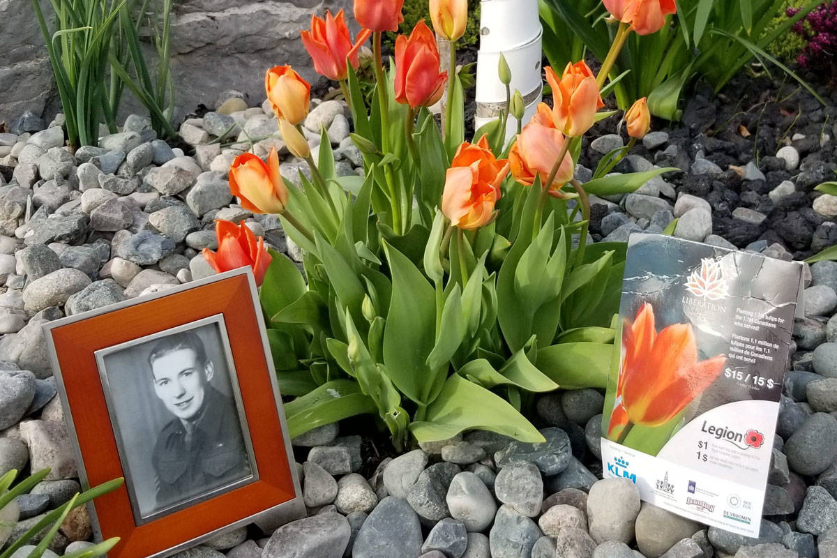 Dave Mitchell tweeted this photo to remember his grandfather, Douglas Mitchell, who was part of the Canadian Forces that liberated the Netherlands during the Second World War. Photos of tulips are appearing online in celebration of Liberation Day in the Netherlands on May 5. (Twitter/Dave Mitchell)