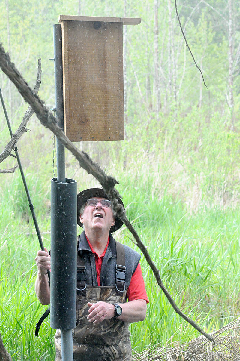 Retired teacher Larri Woodrow has been maintaining bird boxes for local waterfowl in Langley for more than 46 years (Dan Ferguson/Langley Advance Times)