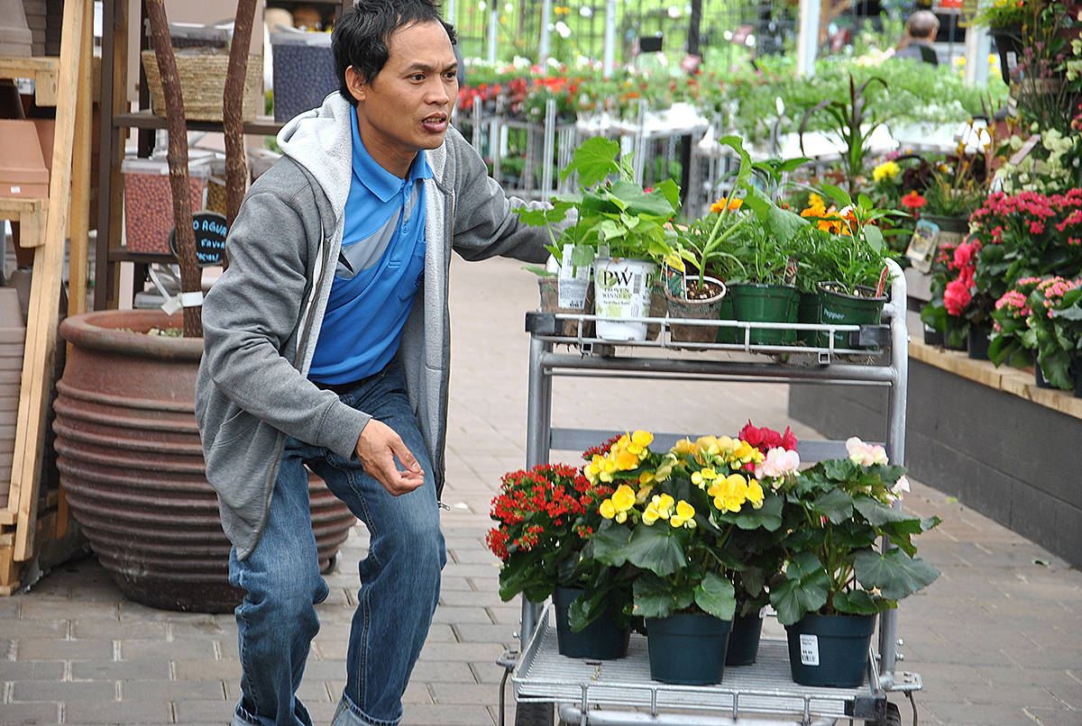 Gardeners, new and experienced, are flocking to the garden centres and nurseries this spring. (Roxanne Hooper/Langley Advance Times)