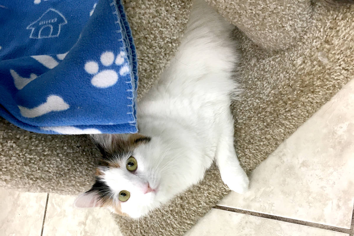 LETTER: The pawsitive tale of Mary the cat