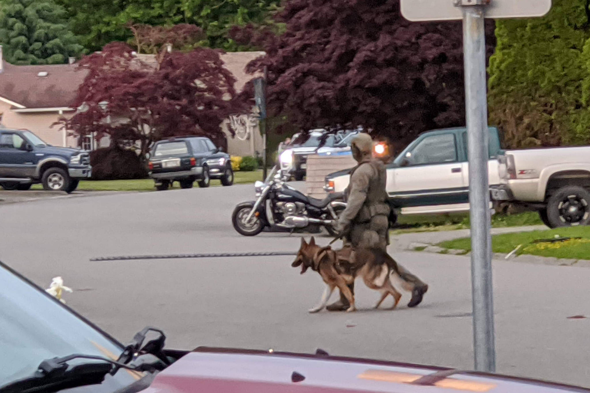 An RCMP officer with a police dog near the scene of a police incident involving shots fired, according to witnesses, at a residence on Christina Drive in Chilliwack on May 23, 2020. (Submitted)