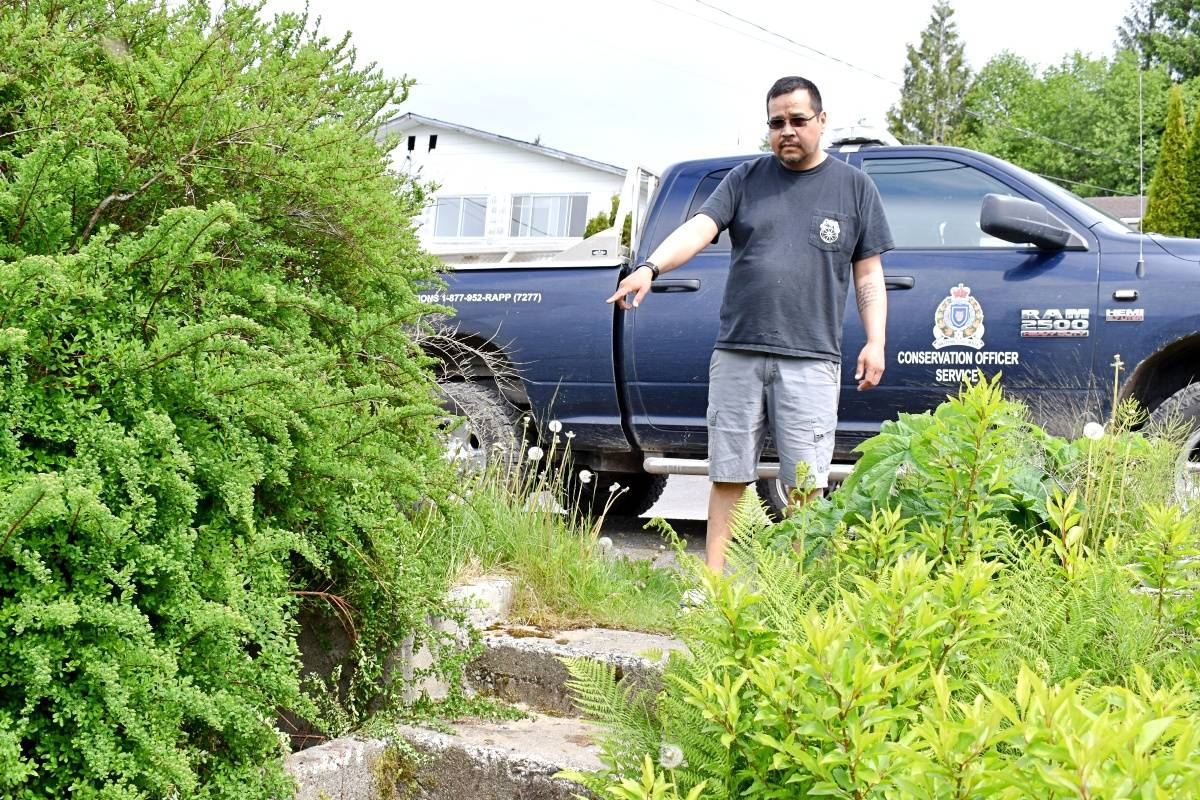 Frank Russ shows the bushes where the wolf, which attacked his father on May 29, appeared to be residing. The Conservation Officer Services is posted outside the Port Edward residence where the attack occurred. Patrols to find the wolf are continuing. (Photo: K-J Millar/The Northern View)