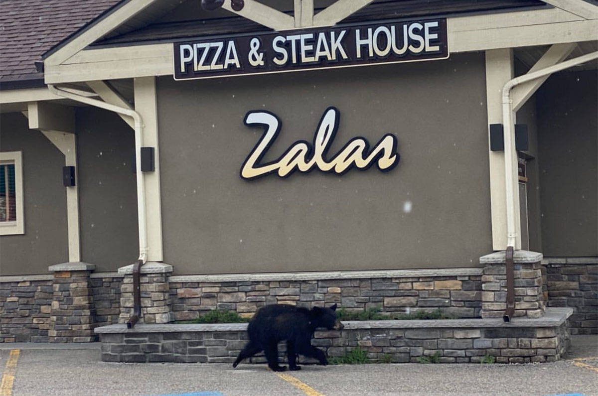 A black bear went into the pet store at around 2 p.m. on June 3. (Photo by Braydon Roebuck)