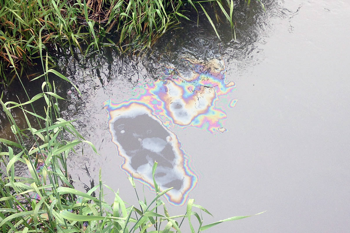 A passerby said the odour from a fuel oil spill that contaminated a fish-bearing stream near the Langley airport could be detected from 50 feet away (Stanley Brown/special to Langley Advance Times)