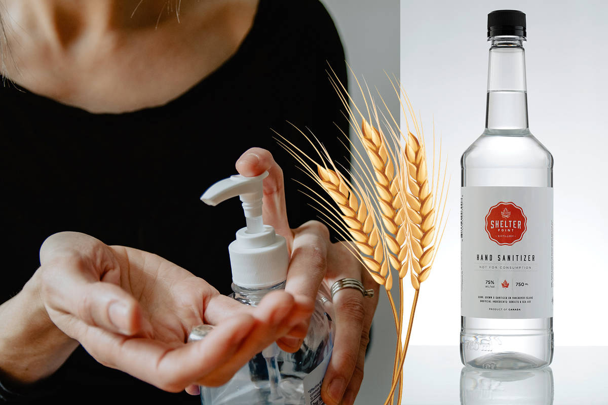 While other distillers are bottling individual sizes of sanitizer, focusing on larger-size products lets Vancouver Island's Shelter Point serve organizations like the RCMP, Department of National Defence, Fraser Health Authority, and school districts.