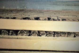 Bats in bat house. (Verena Reznicek photo)