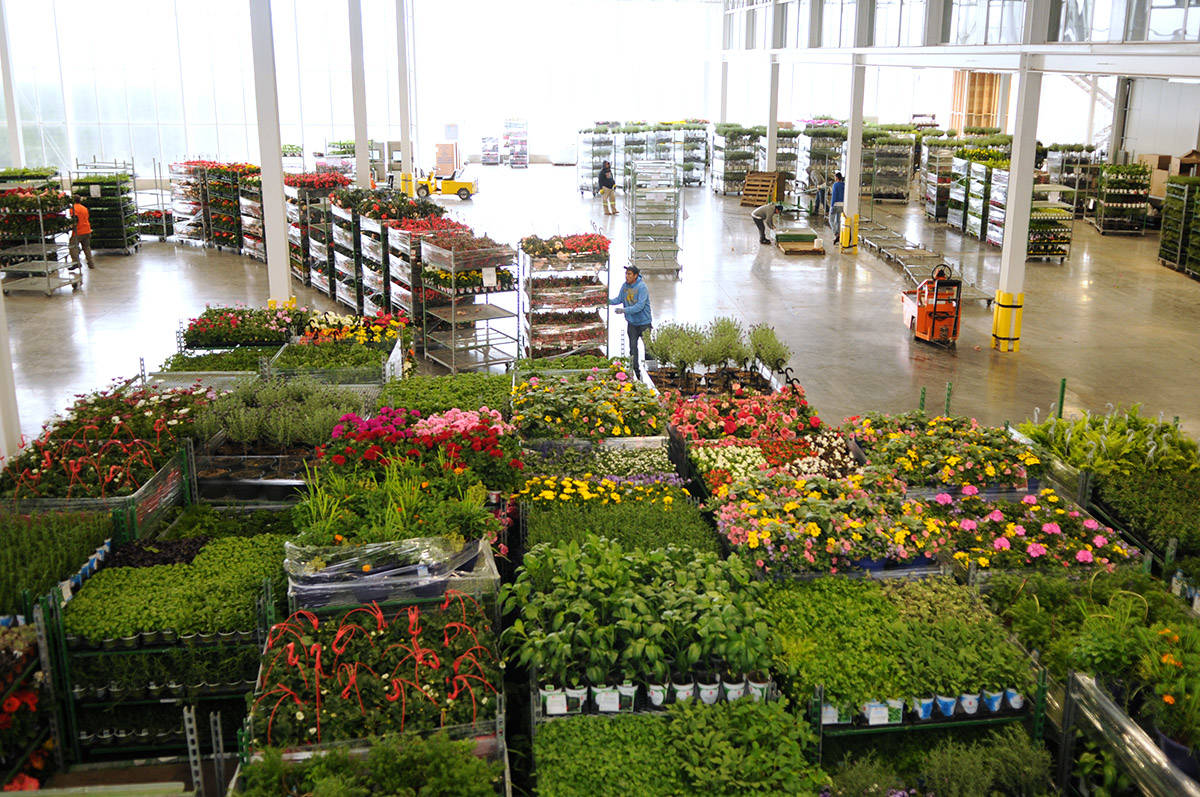 Workers organize carts full of plants at DeVry Greenhouses on April 22, 2020. The provincial government has made it easier for people to find and learn about jobs in the agricultural sector with its new B.C. Farm, Fish and Food Job Connector. (Jenna Hauck/Progress file)