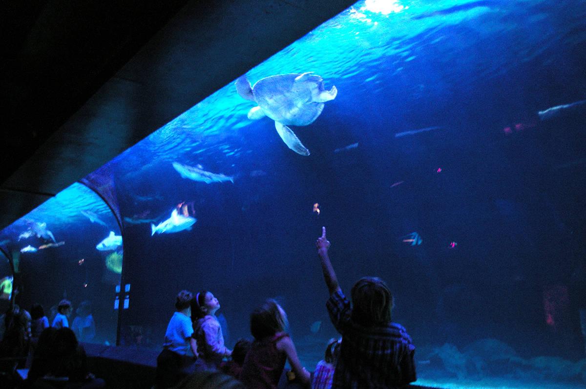 Vancouver Aquarium (Wikimedia Commons)