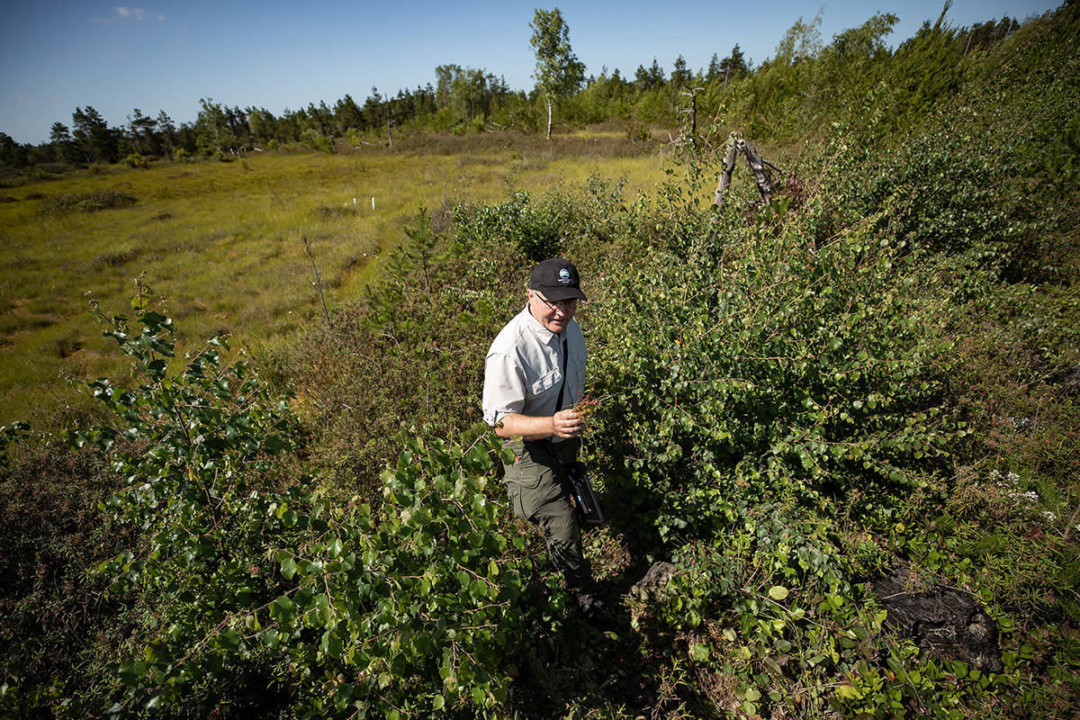 Biologist Markus Merkens, a natural resource management specialist with the regional district of Metro Vancouver, walks through Burns Bog during a tour after an announcement, in Delta, B.C., on Monday, June 29, 2020. The regional district of Metro Vancouver says it has achieved corporate carbon neutrality, balancing its carbon output with its removal from the atmosphere. THE CANADIAN PRESS/Darryl Dyck
