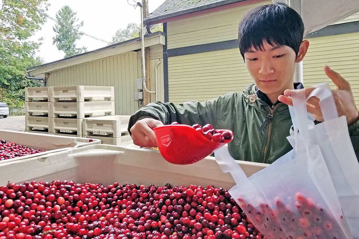 Bags of cranberries are sold at each year's festival, all proceeds to the Fort Langley BIA to enable them to host the one-day event. (Langley Advance Times files)