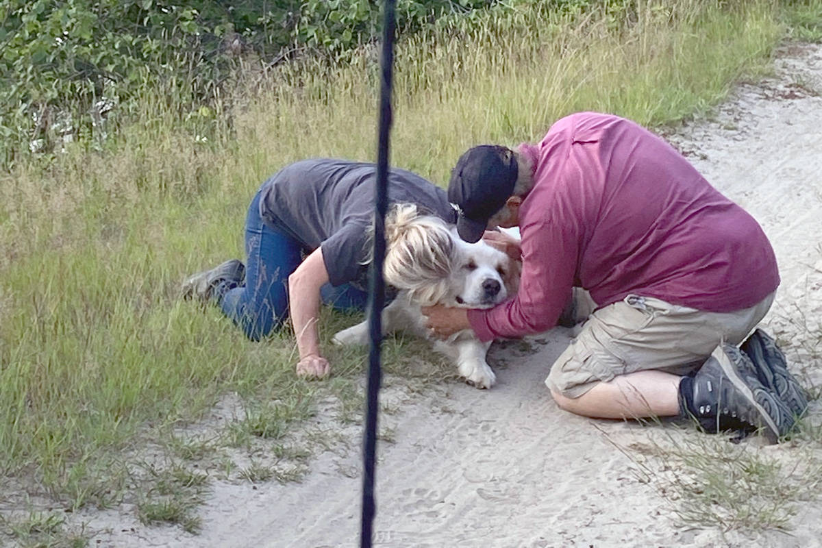 Jasper was reunited with his owners Mary and Brent Hummel. Photo: Steve Smith