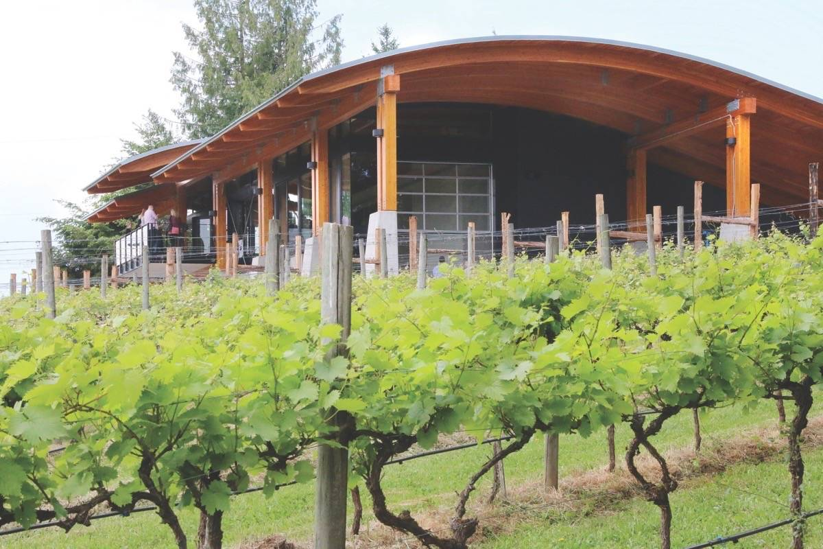 Blue Grouse's winemaker led the initiative, but it would not have been possible without the enthusiastic co-operation of every winery and grape grower in the valley (Citizen file)