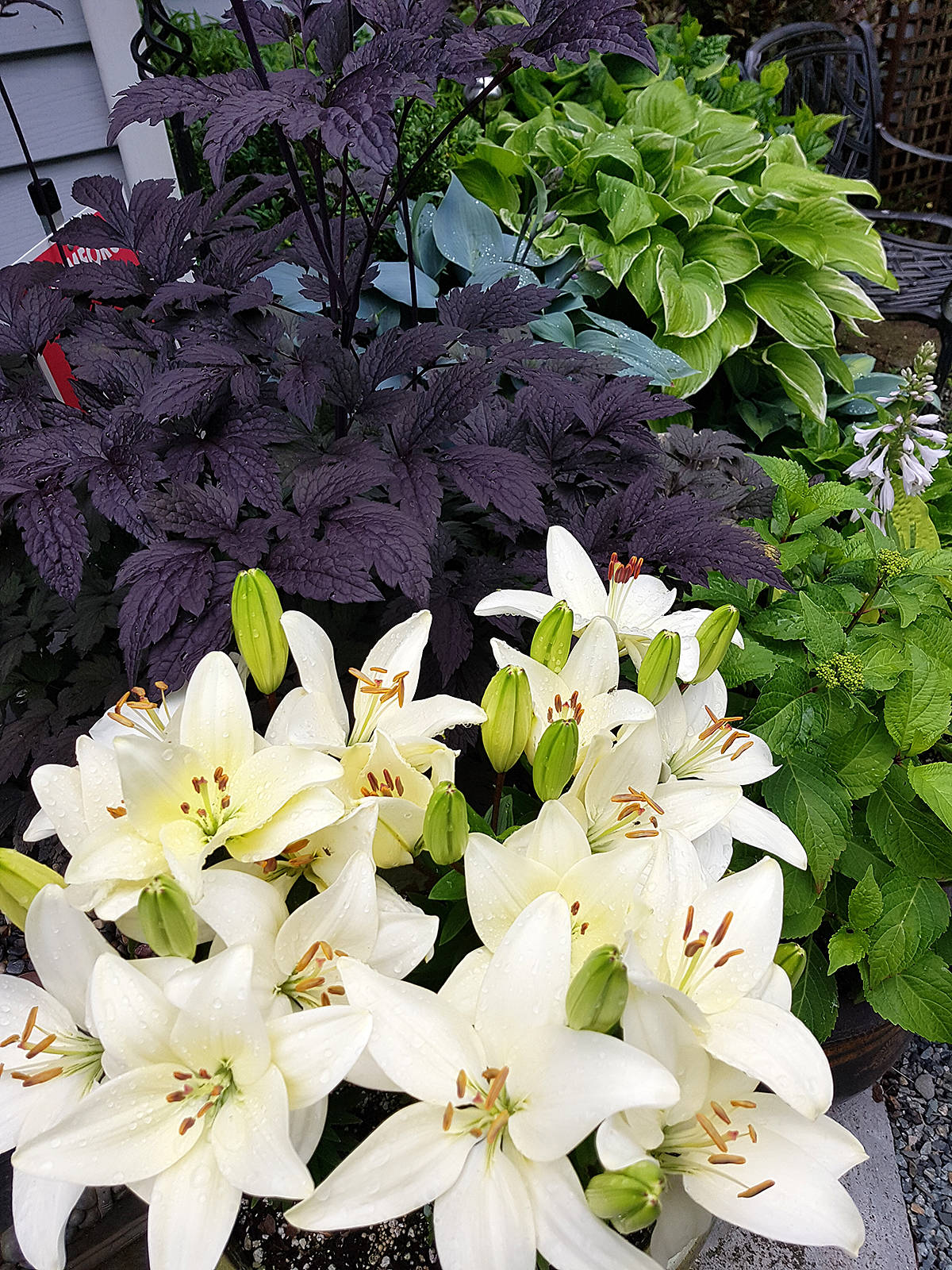 LANGLEY'S GREEN THUMB: Tiny hybrids can add stunning colour to the garden