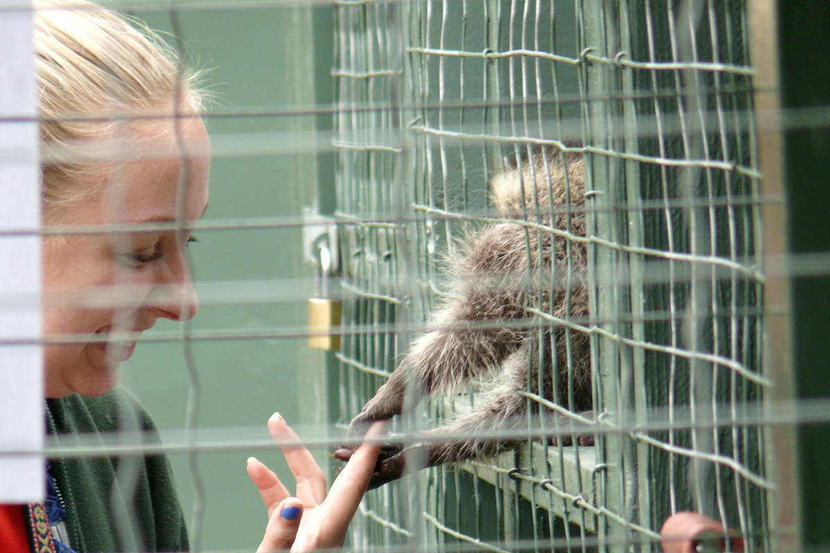 A typically well attended open house will not be moving ahead this year at Critter Care Wildlife Society in Langley due to the ongoing coronavirus pandemic. The annual open house weekend is the only two days in the day the centre is open to the public. (Dan Ferguson/Langley Advance Times)