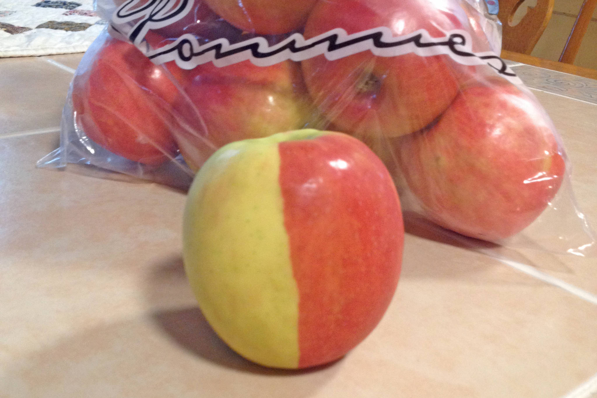 Lori Verhelst of Telkwa got a big surprise when she brought home a bag of Pink Lady apples on Wednesday, a perfectly half red, half yellow fruit. (Contributed photo)