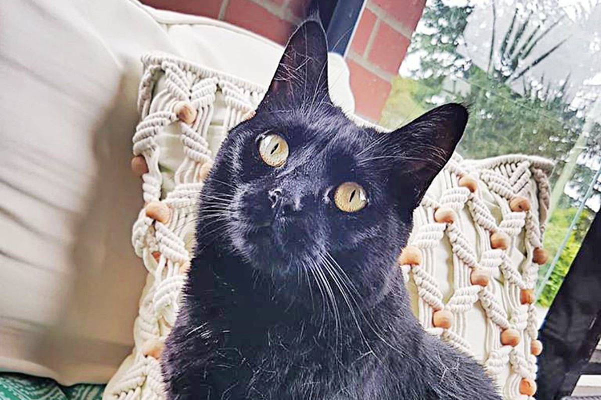 Boo is the five-year-old cat of the Hildebrandt family who lived at Madison Place which was damaged by fire on Friday, July 17. (Hildebrandt Facebook photo)