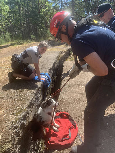 RCMP Const. Cydney MacNeill watches as Nanaimo Fire Rescue firefighter John Fournier pulls a dog from the Abyss on Tuesday afternoon. (Nanaimo Fire Rescue photo)