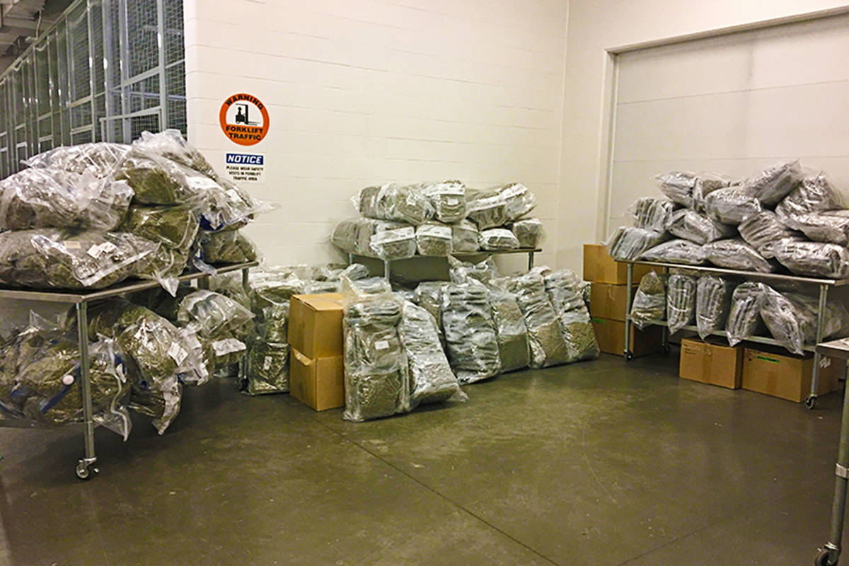 More than 1,100 kilograms of dried cannabis was seized during five raids in Langley, Surrey, and Delta in 2019. Court documents show no charges have yet been laid in the case. (RCMP photo)