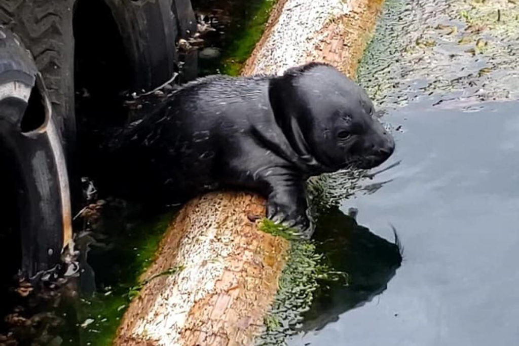 'Please don't': Biologists irked after man plucks baby seal onto boat off Vancouver Island