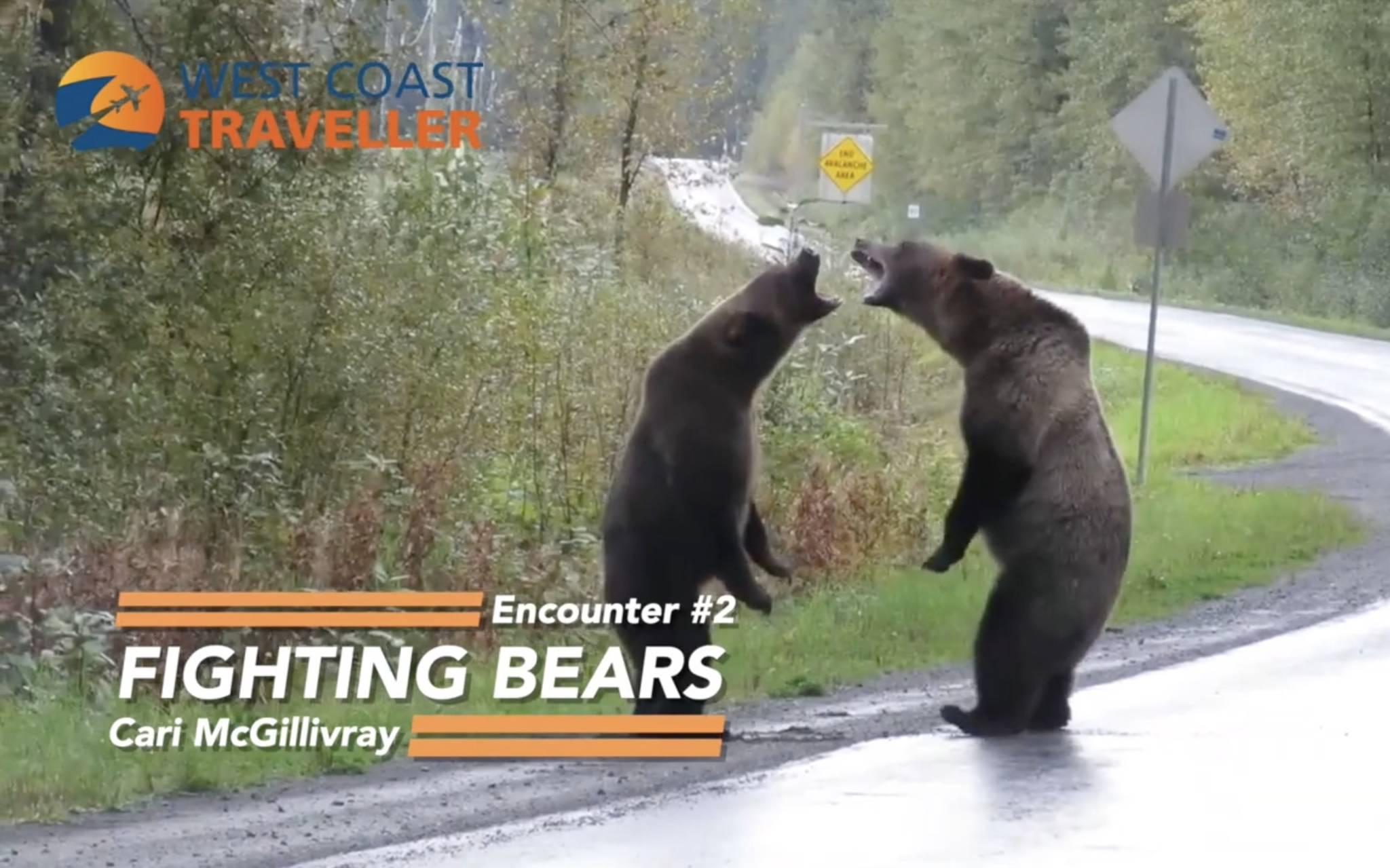 West Coast Wild Encounters