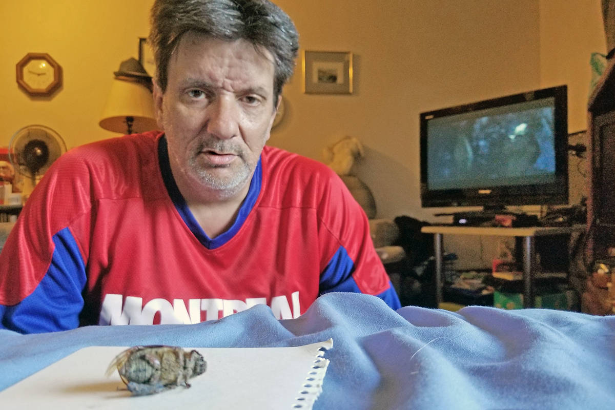 Langley City resident Sylvain St. Georges was relaxing in his apartment late Monday night, Aug. when an extra-large insect suddenly landed on his tablet. He thought it might be a giant Asian hornet, but multiple sources have identified it as a beetle. (Dan Ferguson/Langley Advance Times)