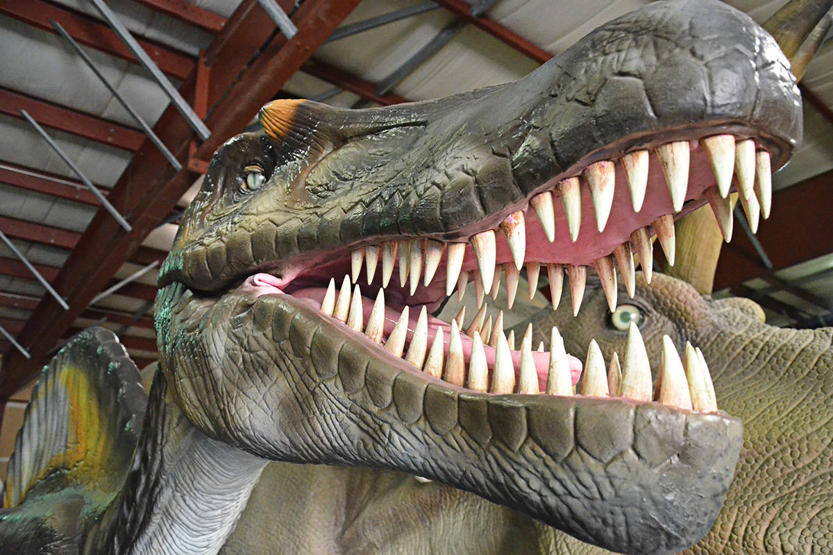 T-Rex earns big bids at Langley dino auction