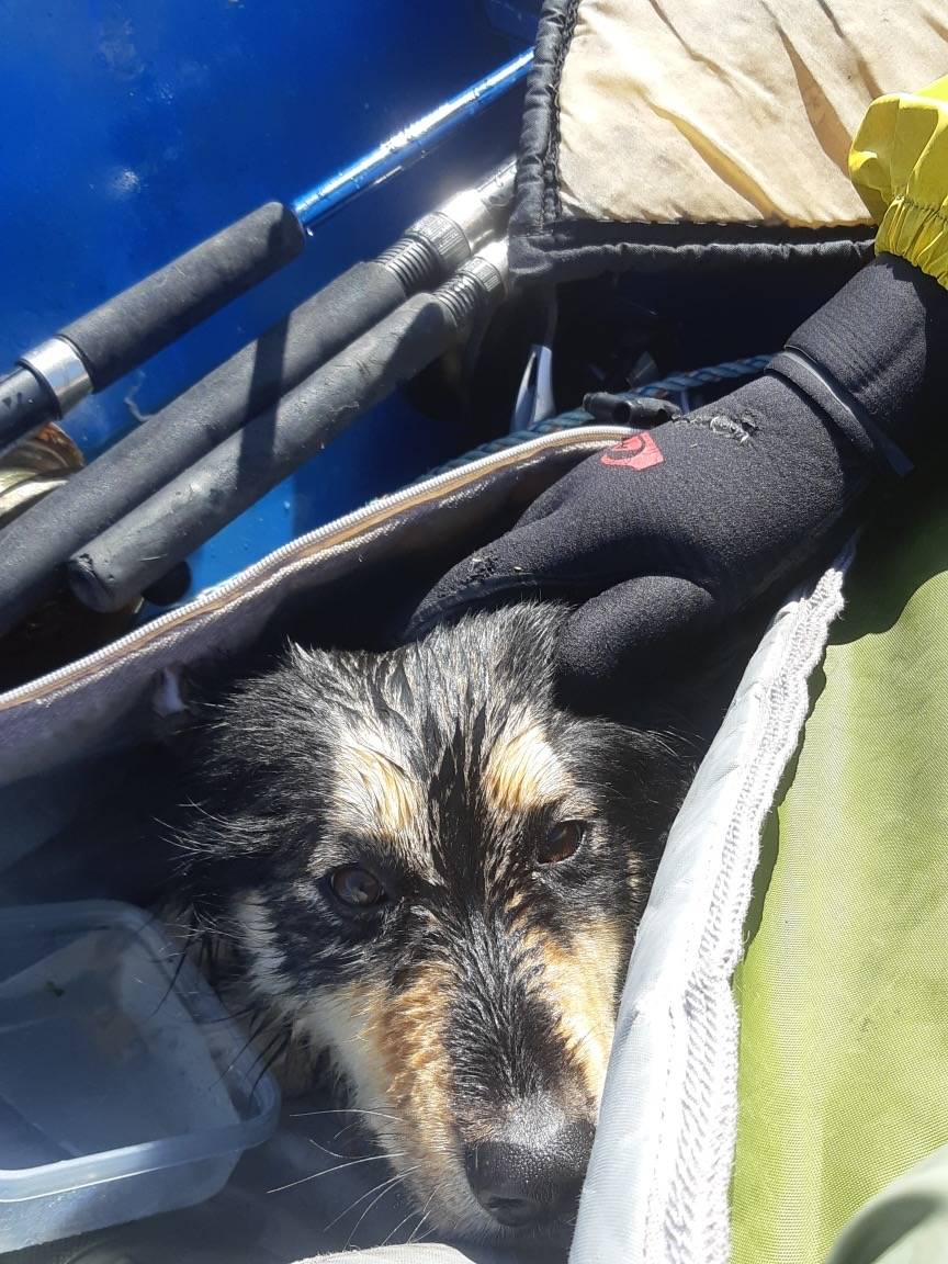 Stella was wrapped in a lifejacket and placed inside a surfboard bag to keep warm after being rescued near Magdalena Point on Saturday, Aug. 8. (Zach Regan photo)