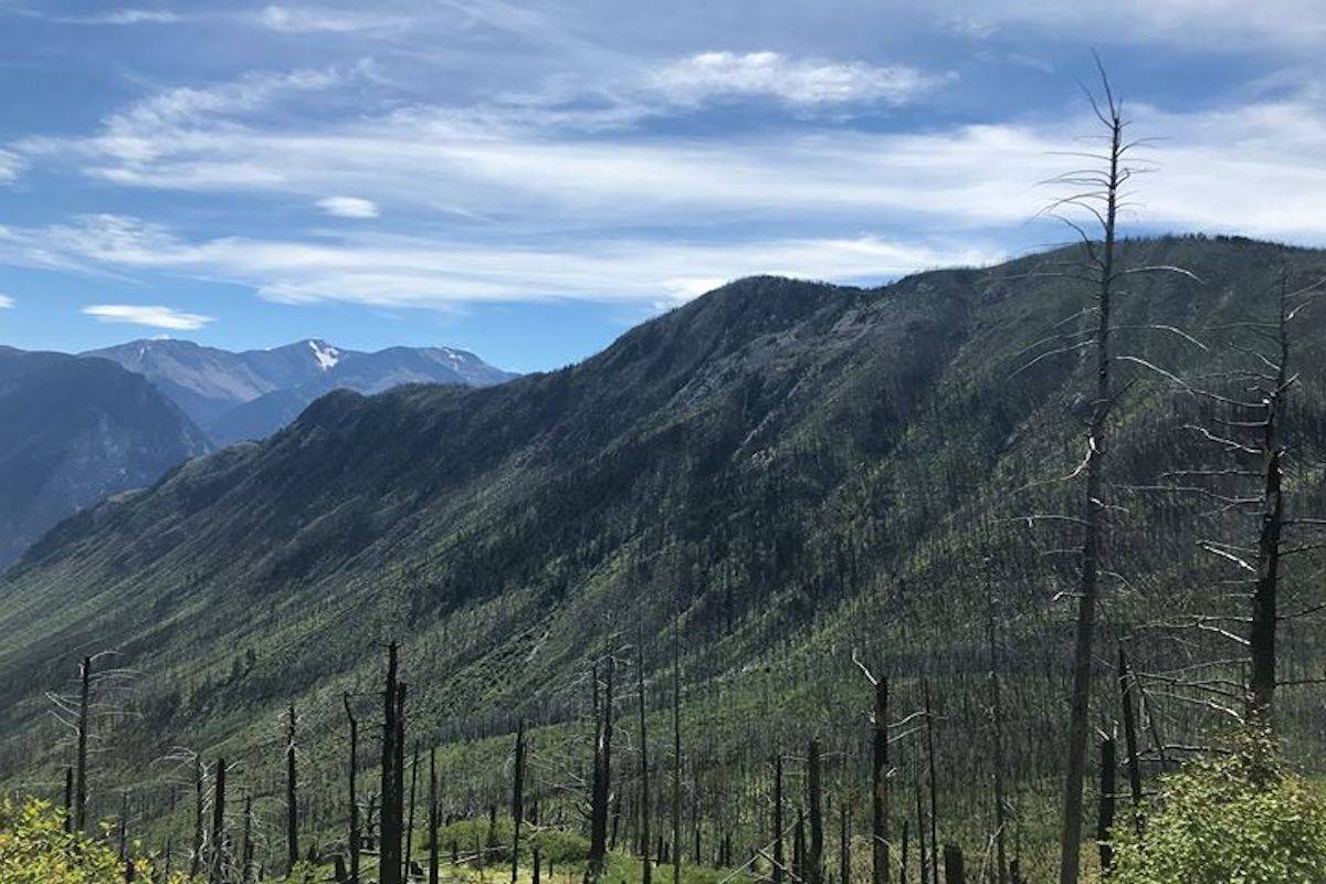 Area of Lillooet where man was attacked. Image: BC Conservation Service