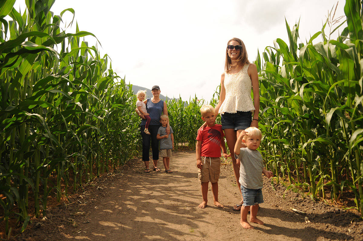 Vanessa Oddy (right) and her mom Diane Bruinsma – seen here on Aug. 11, 2020 with Oddy's two children Aiden (grey shirt) and John (red shirt) and her niece Fay and nephew Nash (at back) – are getting ready to open the Chilliwack Corn Maze on Aug. 15 with COVID-19 protocols in place. (Jenna Hauck/ Chilliwack Progress)