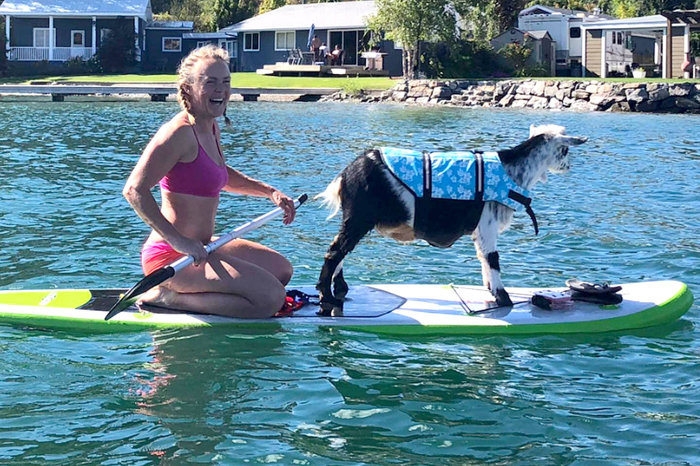 Goat knows how to float in Okanagan